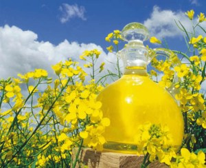 IS CANOLA OIL PALEO?