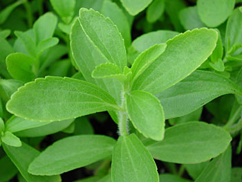 IS STEVIA PALEO?