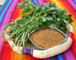 IS FENUGREEK PALEO?