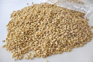 ARE WHEAT BERRIES PALEO?